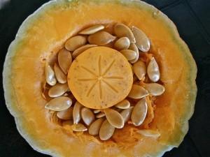 dyne pumpkin-234345_640 autor-dfespi48 zdroj-pixabay