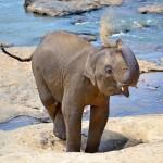 Dobrá zpráva pro slony