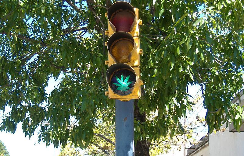 Marihuana má zelenou autor: Pablo Flores zdroj: Wikimedia commons