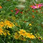 Období sběru bylinek je v plném proudu