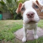 Tito psi vám zvednou náladu! (video)