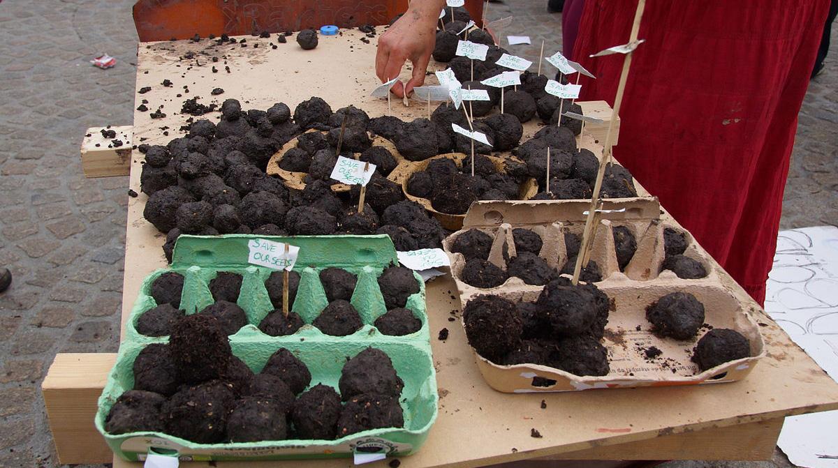 Semínkové bomby autor: Floris Looijesteijn zdroj: Wikimedia commons