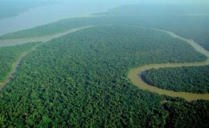 Amazonský prales autor: Lubasi zdroj: Wikimedia commons