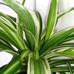 Pokojové rostliny, které nejlépe vyčistí váš vzduch