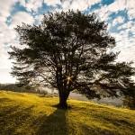 Zajímavá fakta o stromech