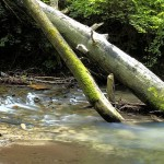 Zapojte se do ochrany pražských potoků