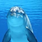 Delfíni vnímají magnetické pole