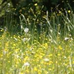 Funkční přírodní přípravky na alergii