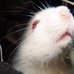 Indie zakázala dovoz kosmetiky testované na zvířatech