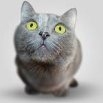 Léčivá síla kočičího předení