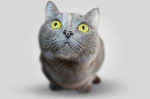 Kočka autor: egoaltere zdroj: Pixabay.com