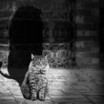 Kouzelné kočky
