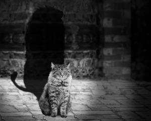 Kočka autor: FlashBuddy zdroj: Pixabay.com
