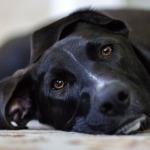 Spirituální lekce, které se můžeme naučit od psů