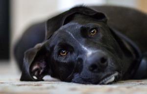Pes autor: Jenfaz zdroj: Pixabay.com