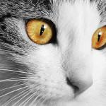 Kočky vidí neviditelný svět