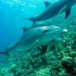 Delfíni na Havaji budou chráněni před turisty