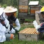 Poznejte včely na kurzu v Toulcově dvoře
