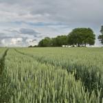 Konec pesticidů a GMO? Nový patent přinese revoluci