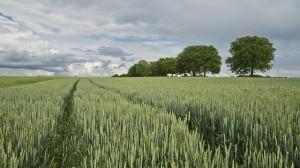 Zemědělství autor: Broin zdroj: Pixabay.com