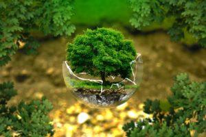 Ochrana přírody zdroj: Pixabay.com