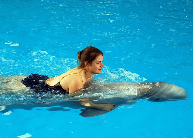 Plavání s delfíny zdroj: Wikimedia commons