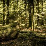 Co jste o nevěděli o lese