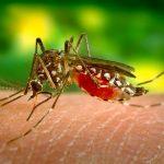 Jak na komáry? Vlastním potem!
