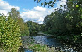 Přirozený les a jeho význam