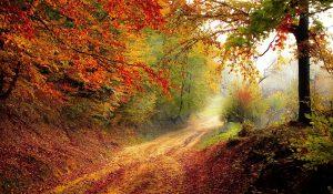 Neobyčejný podzim